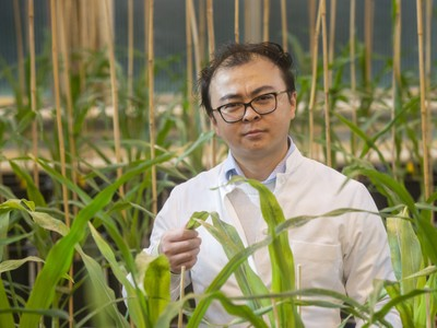 Dr. Peng Yu from the Institute of Crop Sciences and Resource Conservation (INRES) at the University of Bonn.  ? Barbara Frommann/University of Bonn